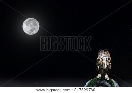 Full moon and star on night sky with owl perched on rock.