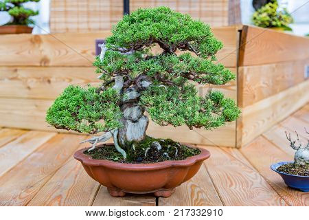 Japanese Art Of Bonsai