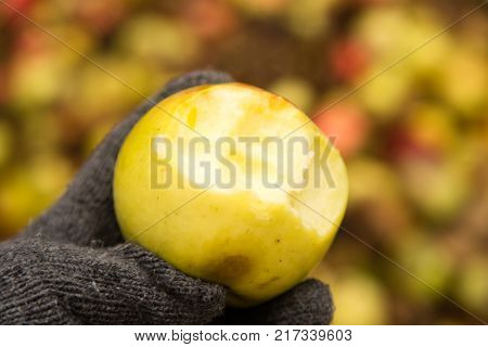 A bitten apple in his hand outdoors .