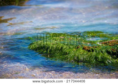 Green algae on a rock in the middle of the sea. Stone rocks algae and sea shore and stones. Beautiful landscapes seaside natural light natural masterpiece rocks at a beach