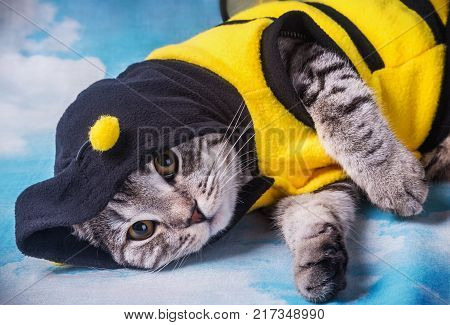 Scottish fold cat in the bee costume on a background of clouds