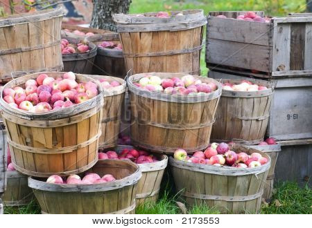 Apples In Bushels