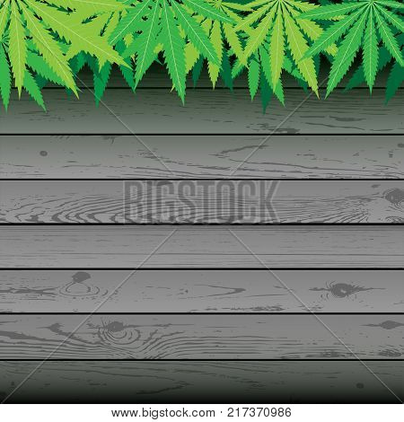 Hemp plant cannabis leaves and gray plank wooden background. Marijuana narcotic wallpaper. Green hashish smoker illustration