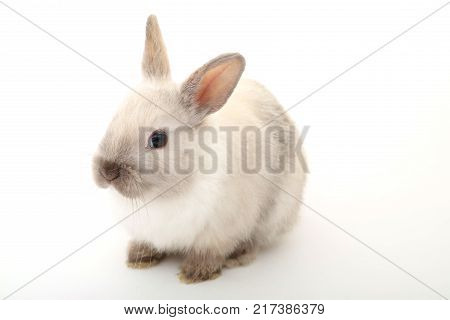 Cute white baby bunny rabbit on the white background