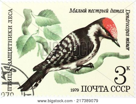 RUSSIA - CIRCA 1979: A stamp printed by Russia, shows Dendrocopos minor - lesser spotted woodpecker, circa 1979