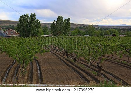 Palisade, on Colorado's Western Slope, is in the heart of Colorado's wine country and Peaches