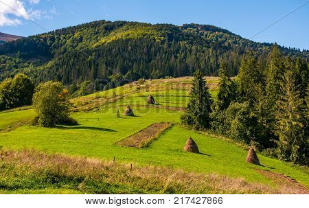 Conifer Tress On Grassy Hillside In Autumn