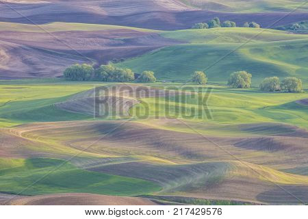 Rolling hills in the Palouse region of Washington State United States of America from Steptoe Butte