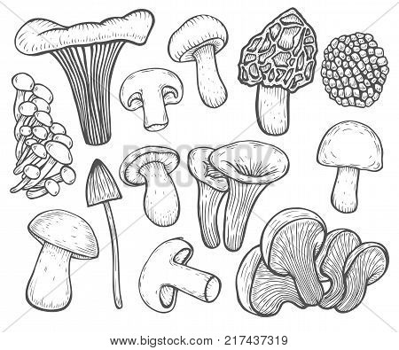 Mushroom hand drawn sketch vector illustration. Organic food isolated on white. Mushroom shiitake, truffle, chanterelle, champignon, enokitake, honey agaric, oyster mushroom, fresh