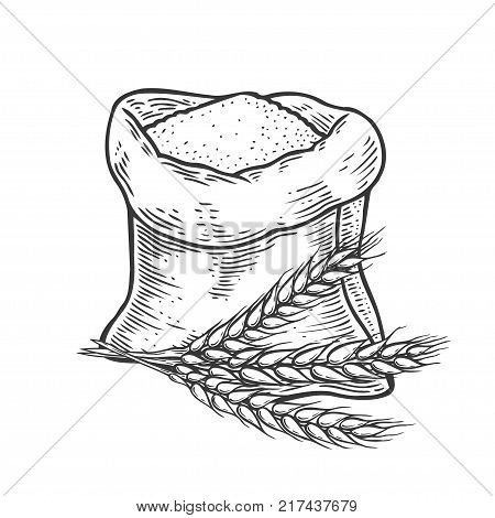 Hand drawn Sack with whole flour or sugar with ear wheat. Isolated on white background. Sketch style. Vintage black vector engraving illustration for label, web, flayer bakery shop.