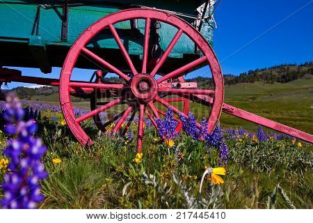 Wagon wheels of Basque sheep wagon with wildflowers