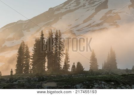 Foggy Sunset Over Pines at base of Mount Rainier
