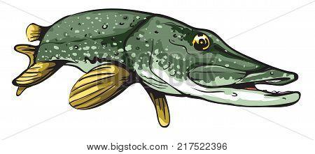 Cartoon vector illustration of fresh water pike fish.