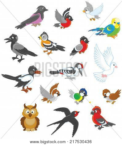Vector illustrations of different birds drawn in cartoon style including several species