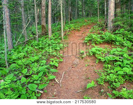 Hiking trail winding up a woodland hill in northern Michigan