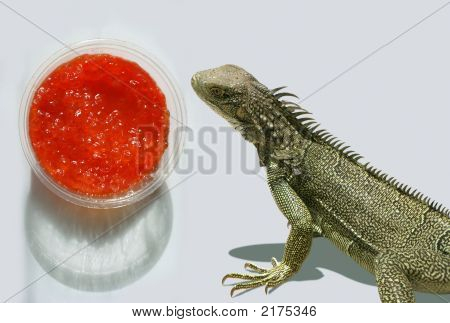 Red russian caviar and hungry green lizard poster
