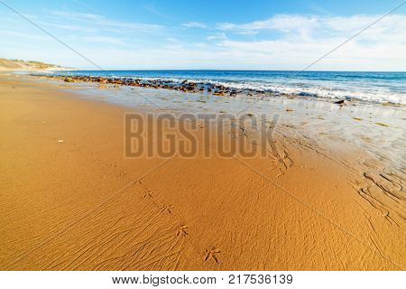 Seagull footsteps in Malibu shore in California