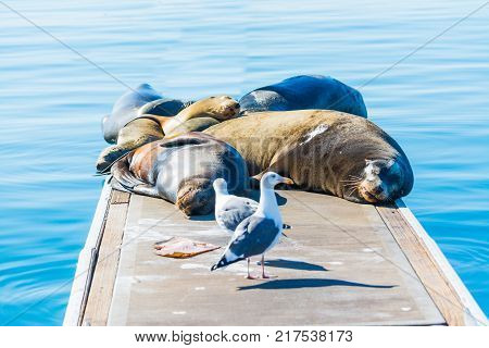 Sea Lions and seagulls on a wooden pier in Oceanside California