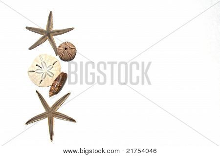 Mixed Seashells And Starfish Background