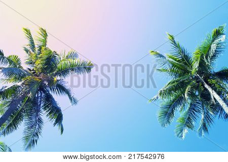Green palm tree crowns on blue sky background. Coco palm vintage toned photo. Summer vacation travel banner template. Exotic palm leaf ornament. Tropical island nature. Green palm in pink orange light