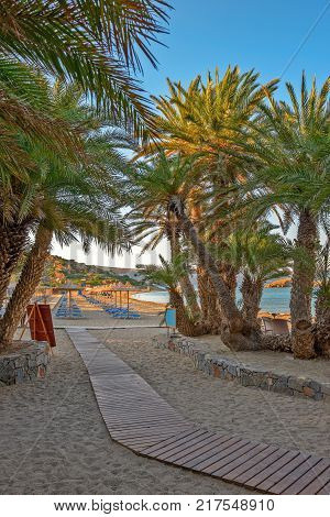Palms on tropical beach with sunbeds and parasols