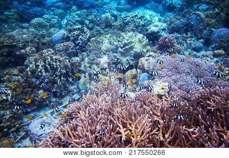 Underwater landscape with coral reef. Undersea scene photo. Fauna and flora of tropical shore. Coral reef underwater photo. Snorkeling in tropics. Exotic island seaside vacation. Aquarium banner