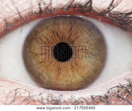 Macro photo of human eye iris pupil eye lashes eye lids.