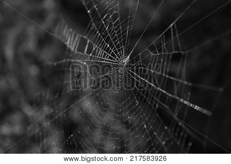 Spider's web illuminated by the evening sun. Selective focus. Black and white