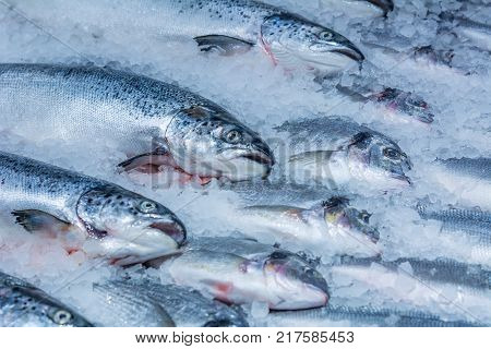 trout on a counter in the ice