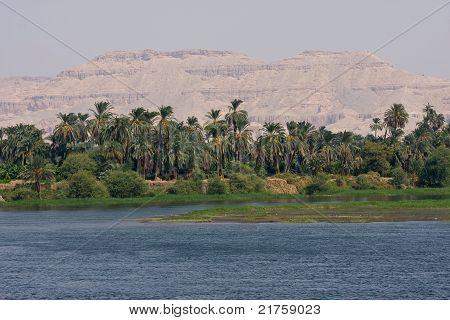 Jungle over Nile river, Egypt