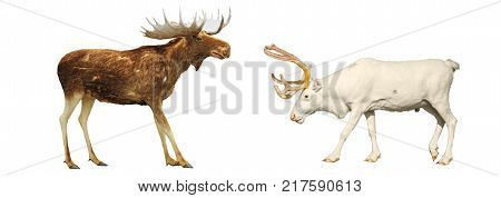 Moose and deer on a white background, winter holidays, animals, a symbol of the new year