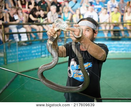 PattayaThailand- November 202017: Show of snakes. Performer play with cobra during a show in Pattaya Snake Show.Collection of poison