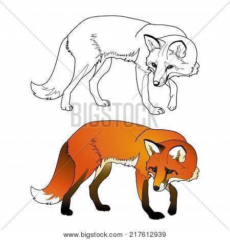 Vector coloring fox, contour and a color sample