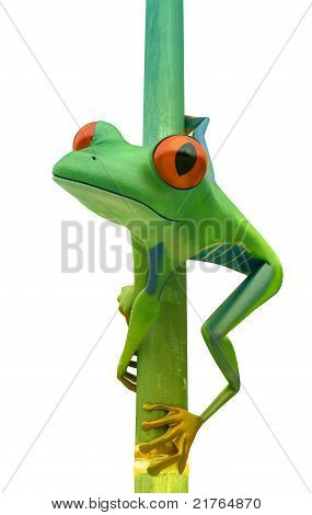 Red Eyed Tree Frog On Bamboo Bole Isolated