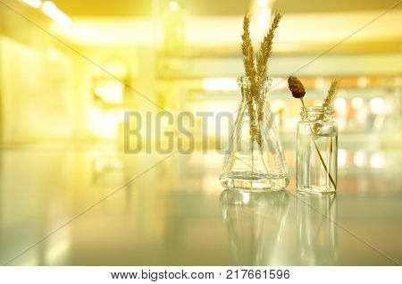 glass flask and vial with grain wheat and flower in agricultural biotechnology laboratory background