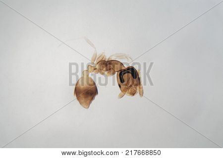 Microscope Photo Of An Ant