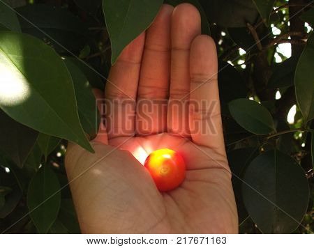 primer plano de una mano tomando pequeño fruto de color rojo iluminado