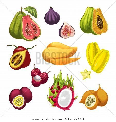 Exotic and tropical fruit vector watercolor illustration. Fresh mango, fig and papaya, guava, carambola and passion fruit, lychee, tamarillo and dragon fruit icon for food, drink and juice design
