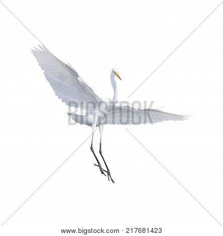 full body and wing feather of Heron Bittern Egret flying isolated white background