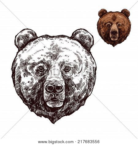 Bear head isolated sketch of wild animal. Grizzly bear muzzle with brown fur, forest predator for hunting sport club mascot, zoo emblem or t-shirt print design