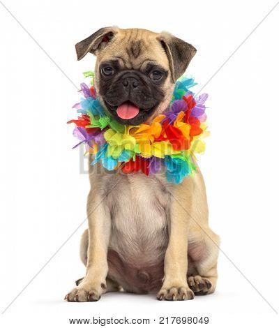pug wearing a hawaiian lei, dog, isolated on white