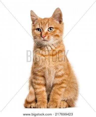 Ginger cat, sitting, isolated on white
