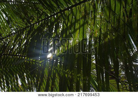 close up of interlocking palm leaves with sun lights in the beachside