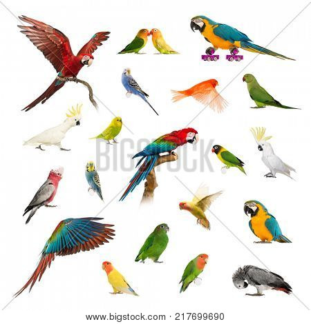 Large collection of bird, pet and exotic, in different position, Isolated on white background.