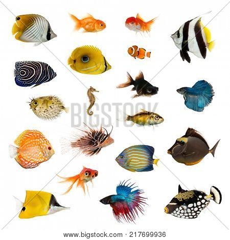 Large collection of fish, pet and exotic, in different position, Isolated on white background.