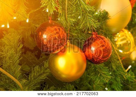 fir tree in chirstmas festivals with red and gold balls background