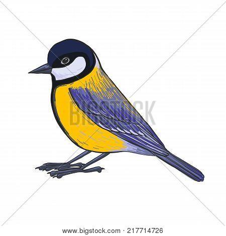 titmouse, vector bird, hand drawn songbird, isolated vector elements