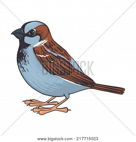 sparrow, vector bird, hand drawn songbird, isolated vector elements