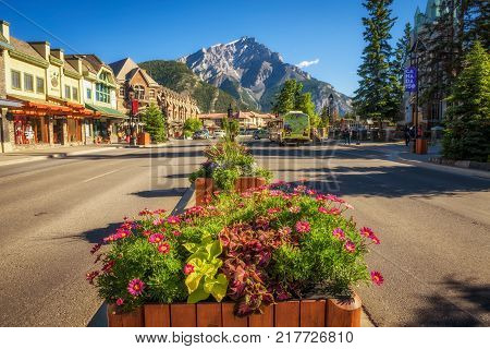 BANFF, ALBERTA, CANADA - JUNE 27, 2017 : Beautiful flowers on the famous Banff Avenue in a sunny summer day. Banff is a resort town and popular tourist destination.