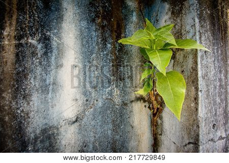 small banyan tree is growing on the wall